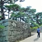 石垣とマツ