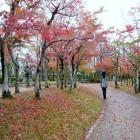 霞ヶ城公園の紅葉