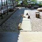 南城跡の猫