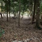 畝状竪掘り