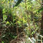 主郭北部の虎口……なんですが、藪にしか見えませんね