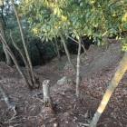 堀切からの竪掘