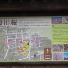 掛川桜案内解説板