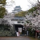 岡口門からの桜と天守