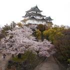 桜が映える天守
