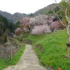 葛城山スタート地点。まだ桜が綺麗。