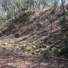 桜馬場西下の帯曲輪。崩れた石垣が散乱する