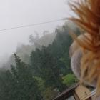 霧が凄くてお城見えないや💧