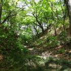 主郭・西曲輪の間の空堀