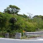 台場橋より米津台場を見る、用水路、台場は樹木が茂り