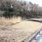 水生植物園側から深大寺城塁を眺める