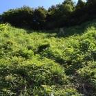 南側の竪堀